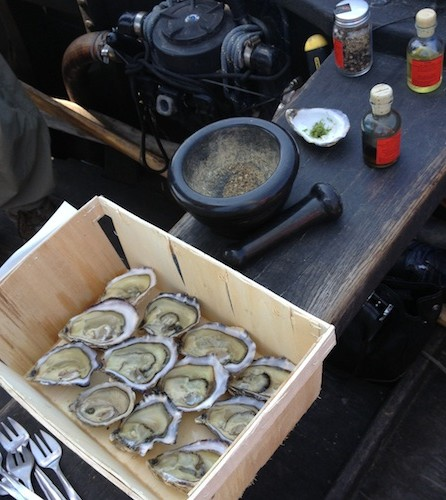oysters_med